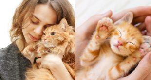 معلومات تُساعدك على التخلّص من مخاوفك تجاه القطط!